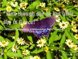 Shakespeare quote a midsummer night's dream