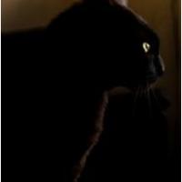 Scaredy Cat #FolkloreThursday