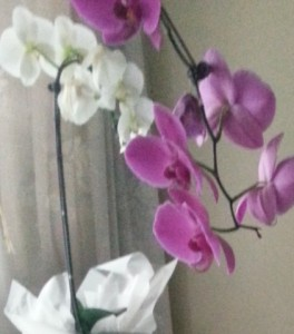 orchid own pic