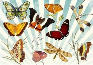 butterflies colour trail