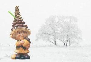 imp nature acorn winter