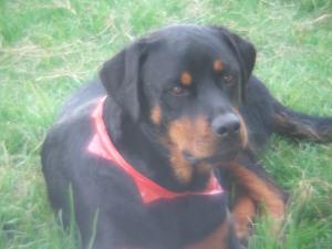 Jasper's last Christmas in 2011.