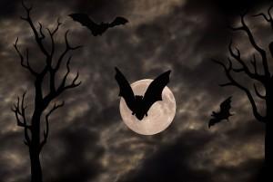 bat pic 4
