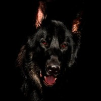 Barguest: the Spectral Dog #FolkloreThursday