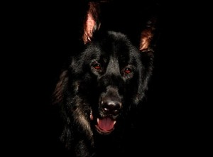 barguest-black-dog