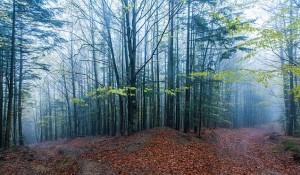 elvenpath forest