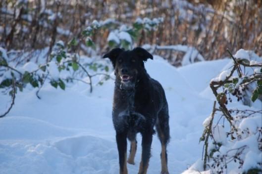 grim-dog